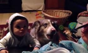 赤ちゃんに「ママ」という言葉を教えていたら、犬が先に覚えてしまった案件