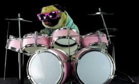 サングラスをかけたパグが『エンター・サンドマン』のドラムを演奏!