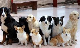 アメリカで犬を救う画期的な法律が生まれる