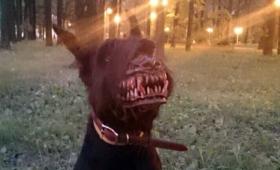 噛まれたらゾンビ化するぞ!ロシアで販売されている犬用マズル(口輪)が狂気に満ちていた ※ 動画追加