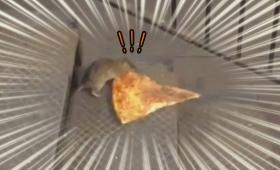 ニューヨークは小動物がファストフードをお持ち帰りし放題。ピザを運ぶネズミ、リスはゴミ箱からシェイクをテイクアウト