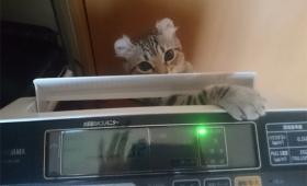 人間には理解不能でも猫理論が働いてる?猫の不可解な行動を集めた写真