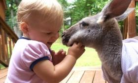 生まれて最初にできた親友はカンガルーだった。1歳の少女とカンガルーのコアな友情物語