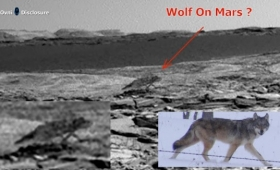 火星にオオカミがでたぞー!!ローバーがとらえた火星を歩く一匹狼?