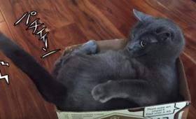 猫の挙動が制御不能。突如自分の尻尾をかじっては舐める猫
