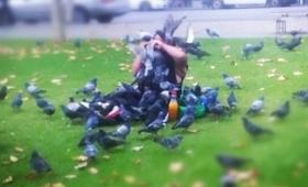 アンタッチャブル!鳩に餌を与えるときにはそれなりの覚悟をもって・・・