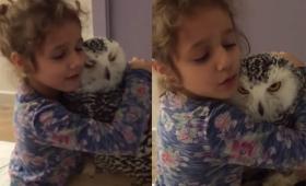 シロフクロウをやさしく抱きしめる少女とその期待に応えたり答えなかったりするシロフクロウ