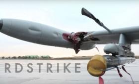どんなに強い飛行機も鳥がぶつかってきたらひとたまりもない