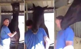 【可愛過ぎ】完全に萌えた!馬が人間に「もっともっと」とせがむ動画が800万回再生され話題に