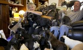 それでも犬が大好きだから。41匹の犬と暮らす夫婦の日常(イギリス)