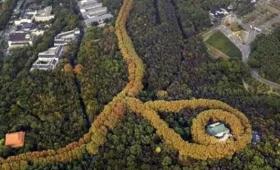 これが偶然の産物とは!プラタナスの木々が作り出した巨大なるネックレス。中国南京「美齢宮」