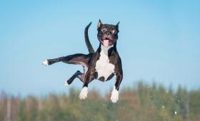 犬だって飛べちゃうよ?犬がジャンプする瞬間をとらえた面白画像