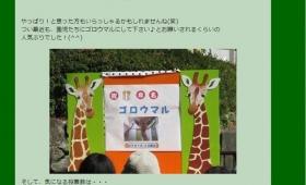 【!?】浜松市キリンの名前「ゴロウマル」に決定!羽生結弦、投票で負ける