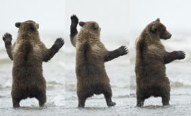 【可愛すぎ】クマがカモメの為にダンスするカワイイ姿が話題に