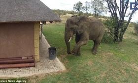 【これは凄い!】南アフリカの象さん、ゴミをゴミ箱に入れるお利口動画を公開