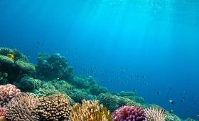 懸賞総額700万ドル!XPrizeが深海探査を後押し、海の核心に迫る