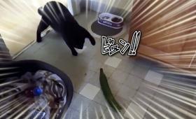 猫とキュウリの意外な関係性がわかる動画総集編