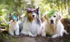 やっぱ犬ってすごい。犬は仲間を思いやり、仲間に自分の餌を分け与える(オーストリア研究)