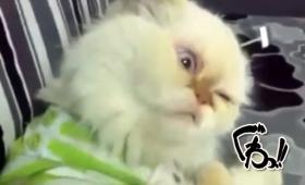 背中をカキカキされて顔面に不具合が起きた猫