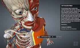 無料で人体の構造を立体的に隅々まで確認できる3D解体新書「HUMAN 3.0」レビュー
