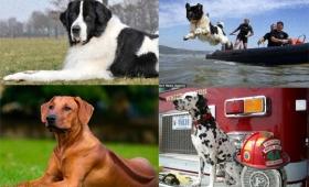 犬がいたから人がいる。人類のパートナーとしてすごい仕事をしてきた6種の犬