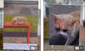 【ジブリみたい】バス停で乗客を待つネコ、事故で亡くなり慰霊碑が建てられる