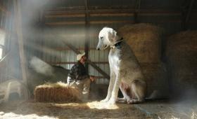 愛犬の存在があまりにも大きすぎるので、実際に巨大化してみたところファンタジー溢れる写真となった。