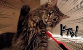 何こいつ、何こいつ!猫の電動歯ブラシに対する反応動画総集編