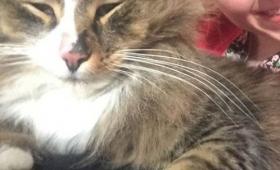 1年以上行方不明だった愛猫が帰ってきた!うっかり巨大化してた!(イギリス)