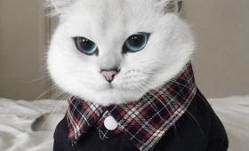 【美しすぎ】279000フォロワーのあまりに美しすぎる「ネコ」が話題に!凄いきれい