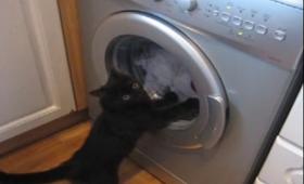 ここは俺が食い止める!洗濯機に立ちはだかりその回転を肉球で阻止しようとする猫
