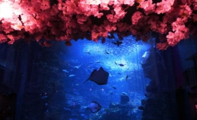 いわし1万匹が桜とともに大水槽で舞い泳ぐ京都水族館「春を楽しむインタラクティブアート 桜といわし」を一足先に見に行ってきました