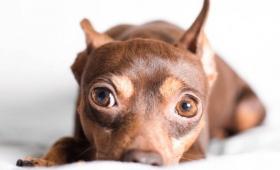 あなたが苦手なら犬も苦手。犬は飼い主の態度を見て他人への態度を変える(フランス研究)