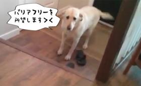 犬だってバリアフリーにしてほしい。段差が怖くて家に入れない犬