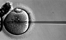 中国で(また)ヒト受精卵の遺伝子編集。今度はHIVへの免疫を埋め込み