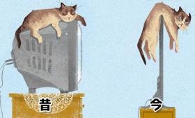 猫も必死。人類のテクノロジーに翻弄されながらもなんとか追随している猫たちのビフォア・アフター画像
