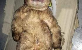 【謎すぎる】人間の赤ちゃんの顔を持つ神話のような「ヤギ」が生まれる!