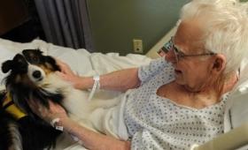 ペットはかけがえのない家族。カナダの病院で重症の患者にペットのお見舞いを許可したところ患者の病と闘う力がアップ