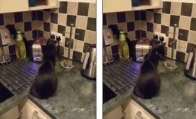 【ガタっ!】今度は「トースター」に怯えるネコが可愛いと話題に