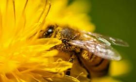大気中の二酸化炭素濃度が上がってハチがいっぱい死んでいく理由
