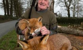 1匹を保護したら、あれよあれよと3匹に。アイルランドのキツネおじいさん