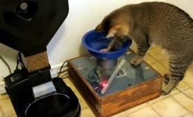 やっぱ猫頭いいだろ。食べたい時にボールを探しからくり仕掛けの自動給餌装置にセットする猫