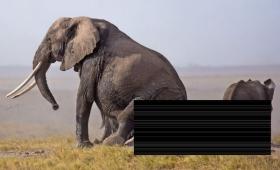 【痒いぞう】ゾウさんが痒い時に対処する行動がクソ面白いと話題に