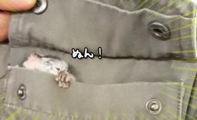 なんかちっこいのでてきた!ポケットの中に潜んでいたガラゴの赤ちゃんがデカ目かわいい!
