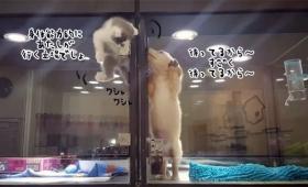 待ってて!すぐ行く!ガラスの扉を乗り越えて、ペットショップで隣のブースにいる子犬に会いに行く子猫、見守る子犬
