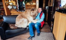 今年23歳になる息子だけどいくつになっても甘えん坊。夕食も一緒に食べるよ、巨大クマだけど(ロシア)
