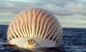 こ、これは!海面に浮いた巨大な球形物体に漁師キョドる(オーストラリア)