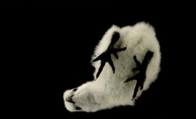 オーストラリアで身近な動物をガラスに乗せて裏側を撮影した映像。(含爬虫類・昆虫)
