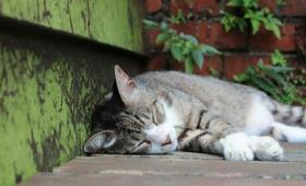 台湾の「猫村」には人と猫が共存する優しい世界が広がっていた