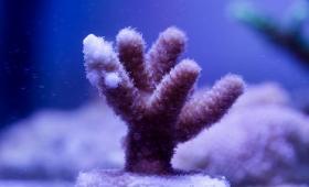サンゴはすべての「悪」を退ける魔除け